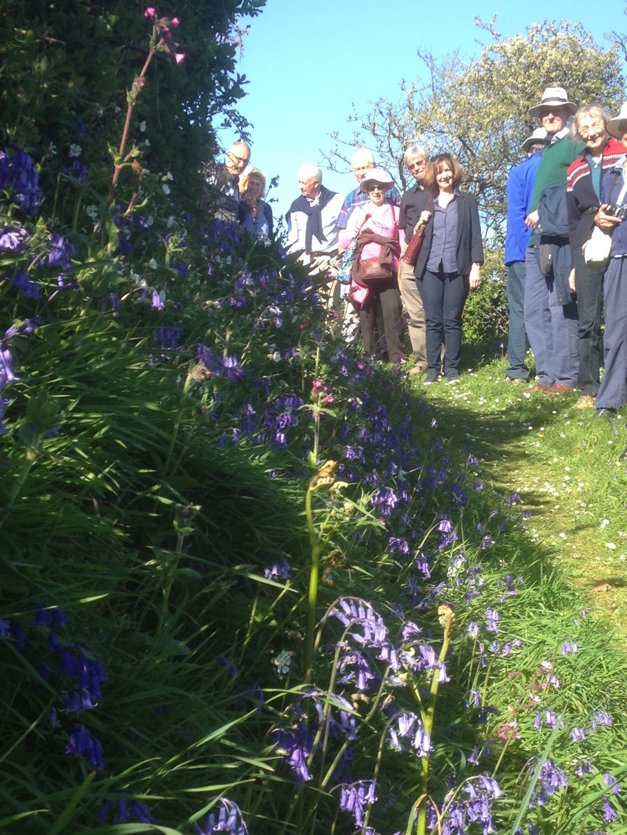 Bluebells and the Kew Guild