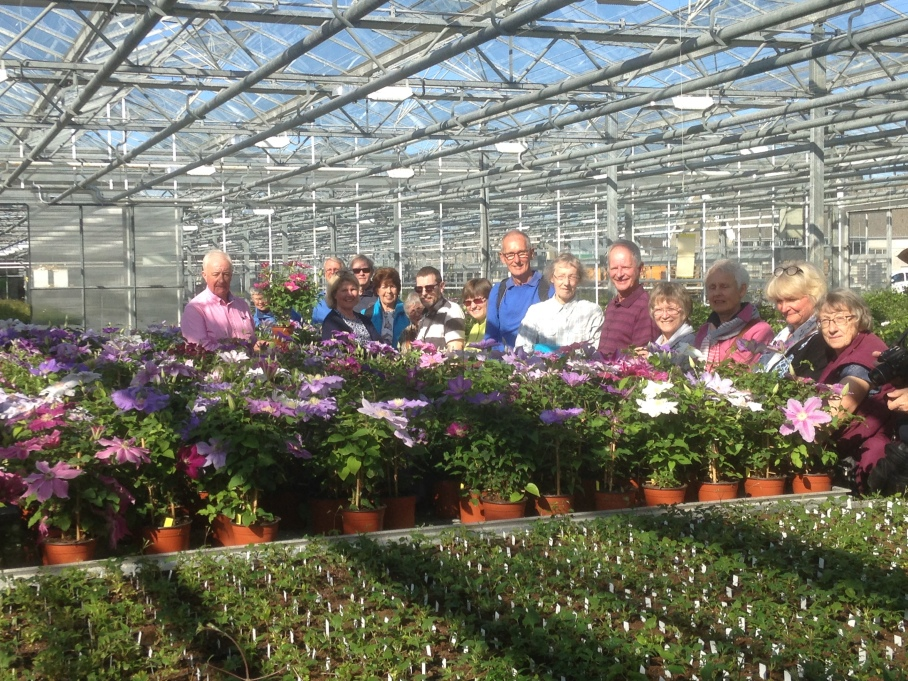 "Raymond showing the ""bulking up"" process of the new Clematis varieties.JPG"