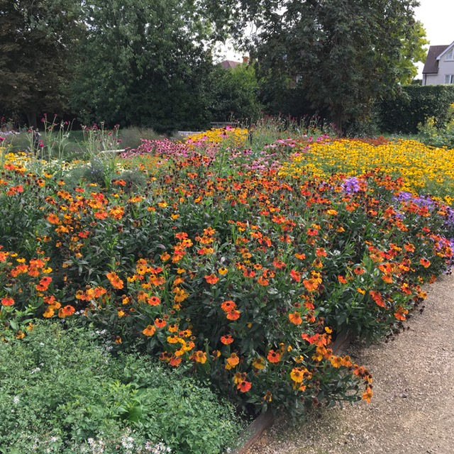 A colourful display in the Agius evolution garden